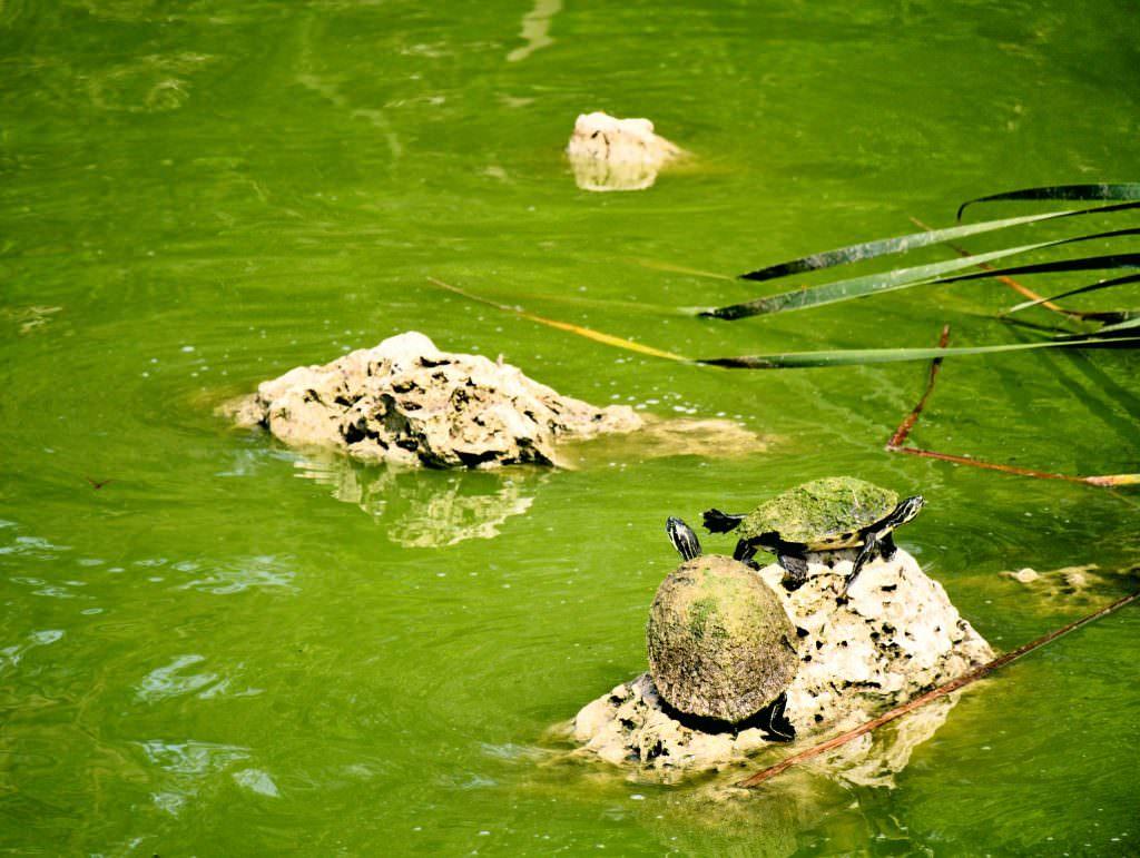 Żółwie. W sam raz na bagienny teren rezerwatu :)