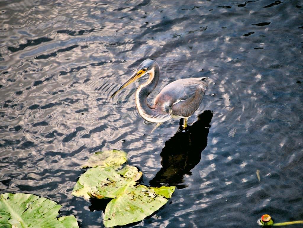Ptaki w rezerwacie przyrody w Fort Myers